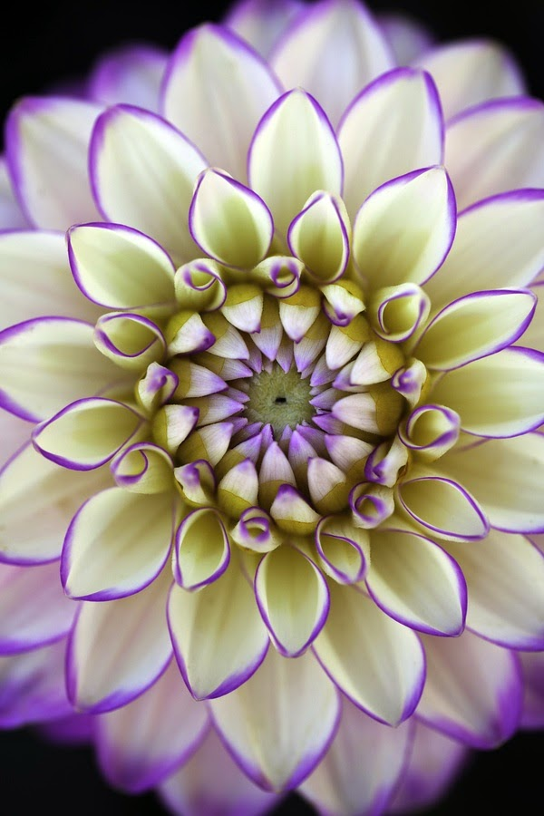 http://500px.com/photo/7944051/dahlia-being-mesmerizing-4-by-alan-shapiro