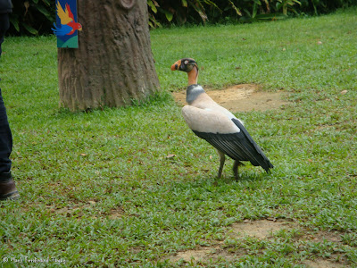 Jurong Bird Park - Kings of the Skies Show Photo 12