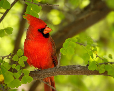 Awesome Birds Wallpapers