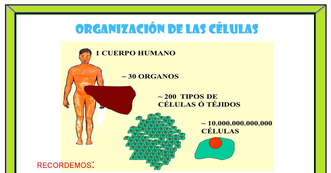 Organizaci n de las c lulas ciencias naturales for Organizacion de un vivero