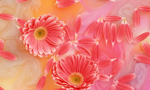 Flowers For Flower Lovers Desktop Flowers Wallpapers