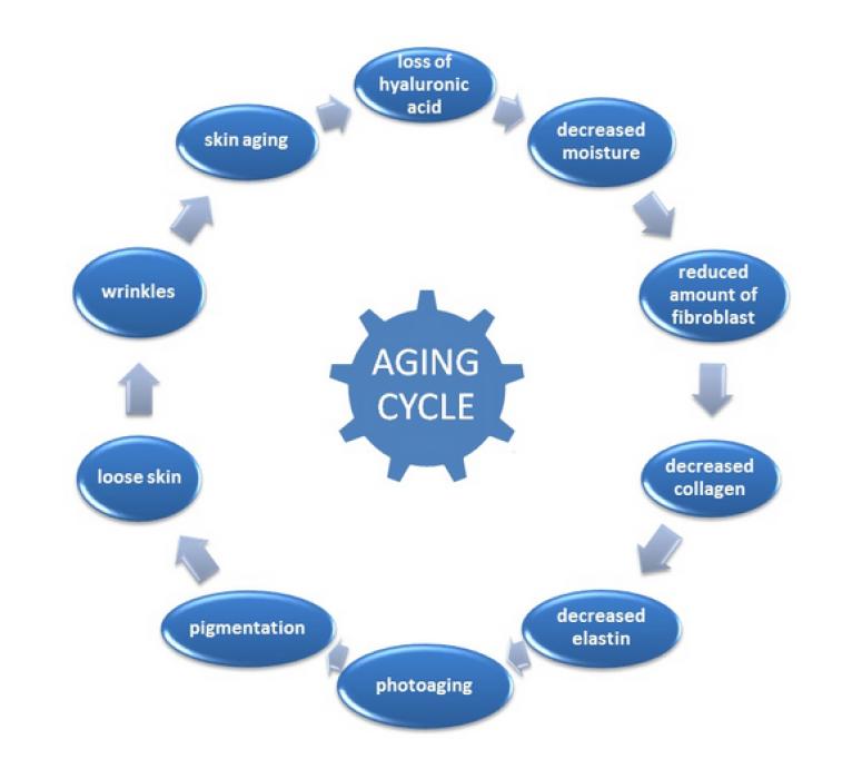 anti penuaan kulit - vitamin c 1000mg