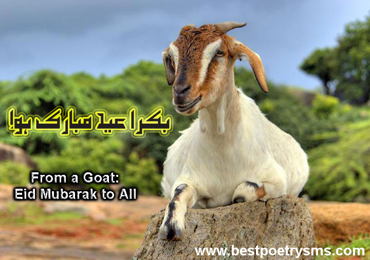 Bakra Eid Eid Ul Adha Collection Wallpapers Sms Pictures