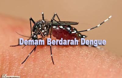 Aedes Aegypti-Demam-berdarah-Dengue