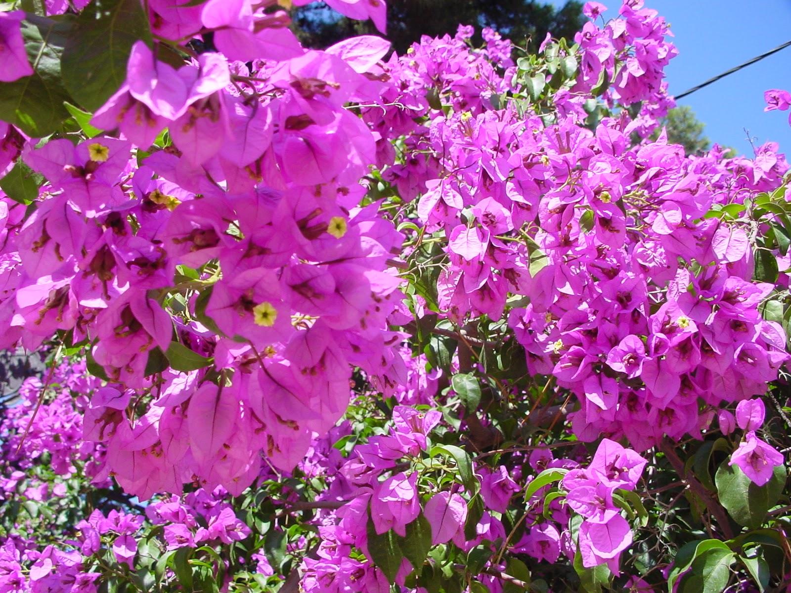 Jardineria eladio nonay damos la bienvenida al verano - Jardineria eladio nonay ...
