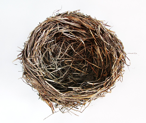 Birds Nest on Bird Nest Jpg