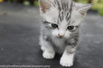 Very nice kitten.