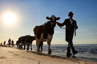 Wat betekent Procol Harum - Kochten een koe