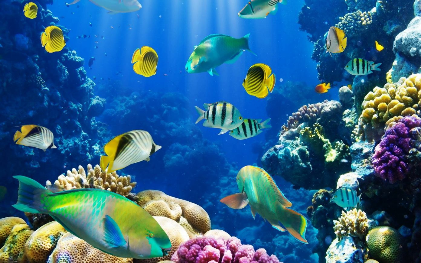 Fish Wallpaper Hd Wallpapers