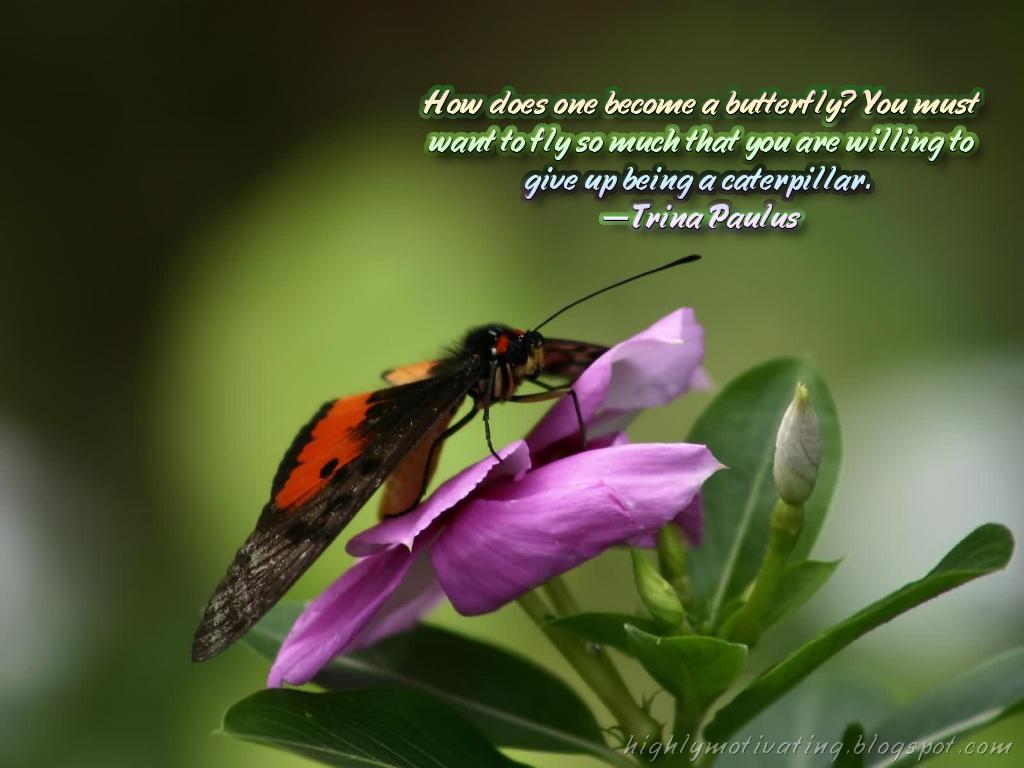http://4.bp.blogspot.com/-ry-Wf4JQVJ8/TvgRP7RaclI/AAAAAAAAA98/oZ_pnF8_wsI/s1600/butterfly2.jpg