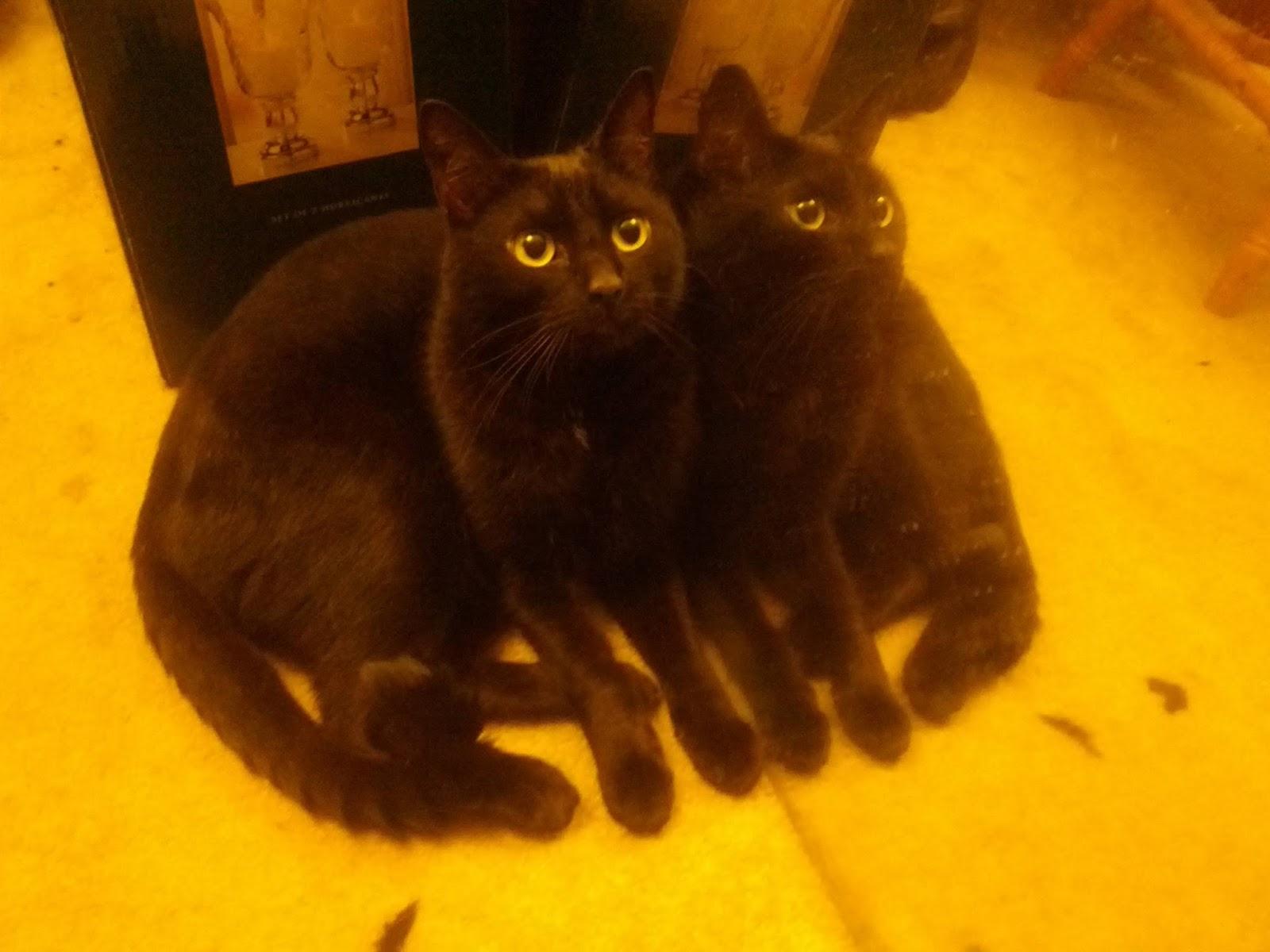 Сумасшедшие коты, фото 33
