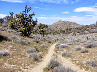 View northwest on Panorama Loop Trail toward Warren Point, Black Rock Canyon, Joshua Tree National Park