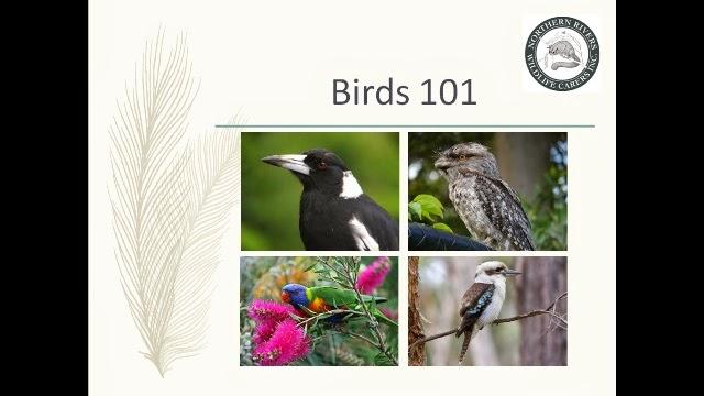 bird_training_for_wildlife_carers