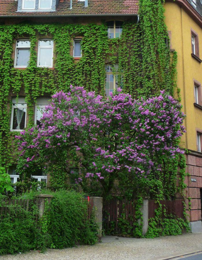 5 rboles de peque o porte adecuados para jardines for Arbustos jardin pequeno