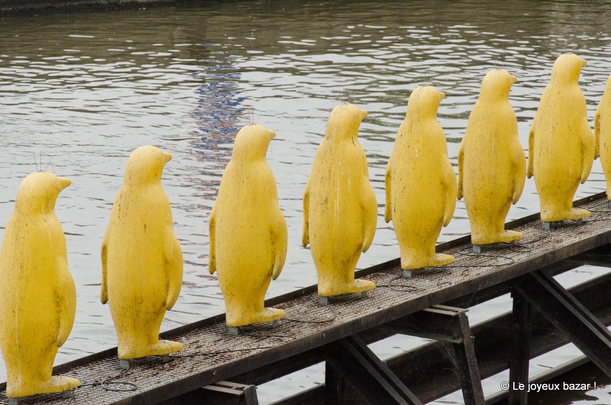 Prague - ile Kampa - pingouins