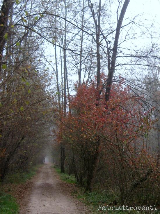 aiquattroventi-autunno-alberi