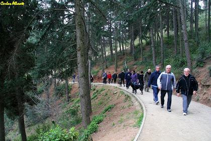 Caminant entre pins al Parc del Guinardó. Autor: Carlos Albacete
