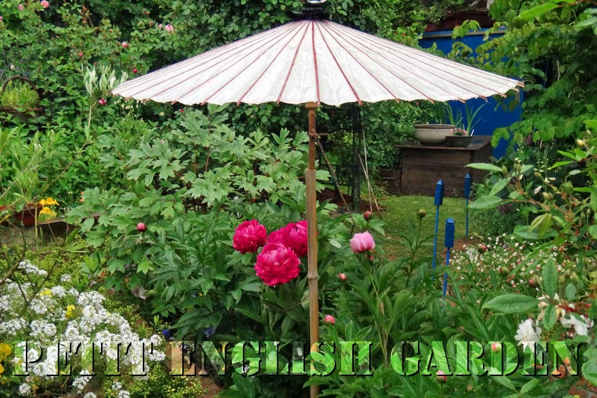 petit english garden by marple poirot umbrellas for plants. Black Bedroom Furniture Sets. Home Design Ideas