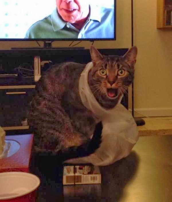 Funny cats - part 86 (40 pics + 10 gifs), cat stuck his head in plastic bag