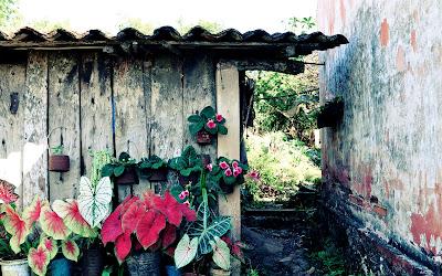 Macetas con flores en la casa de la abuelita by José Luis Ávila Herrera
