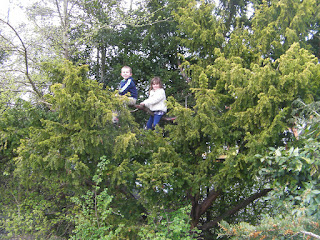 climbing fir tree evergreen in park