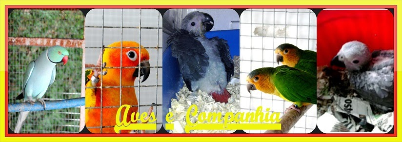 Aves e Companhia