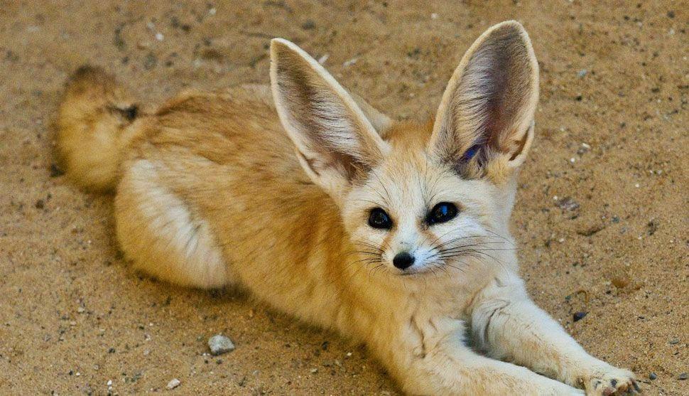 Populares Os 10 animais mais fofos do mundo | Maliária SD89