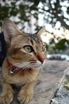 kucingx3
