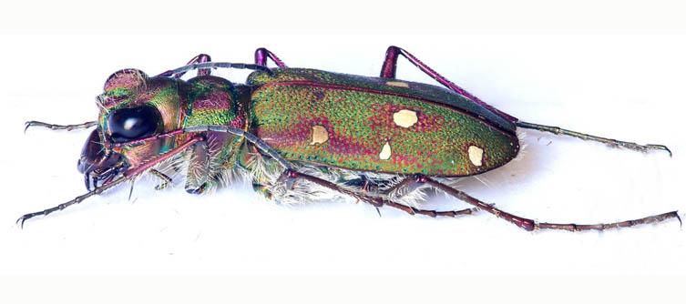 Boletín Sociedad Andaluza de Entomología Vol. 11
