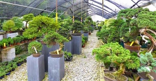 I giorni di bonsai al barbazza garden center di treviso for Vasi bonsai giapponesi