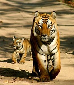 Bhadra Wildlife Sanctuary Chikmagalur India