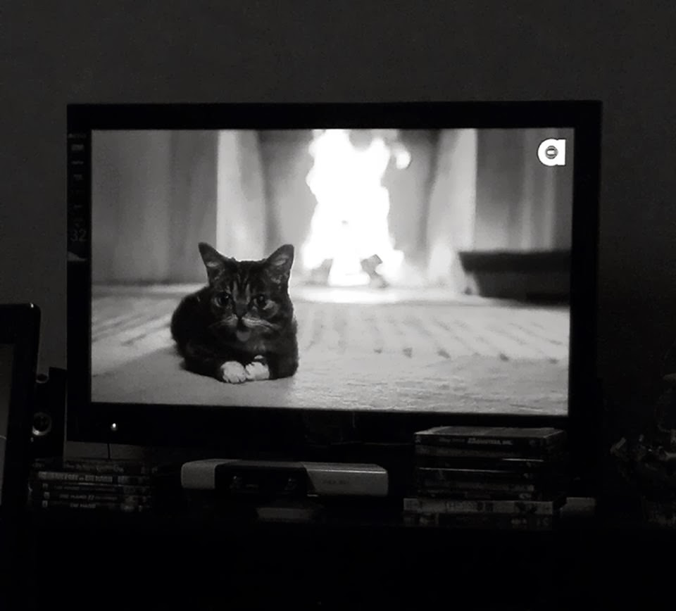 lil bub's magical yule log