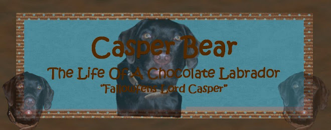 "Casper Bear ""Life Of A Chocolate Labrador"""
