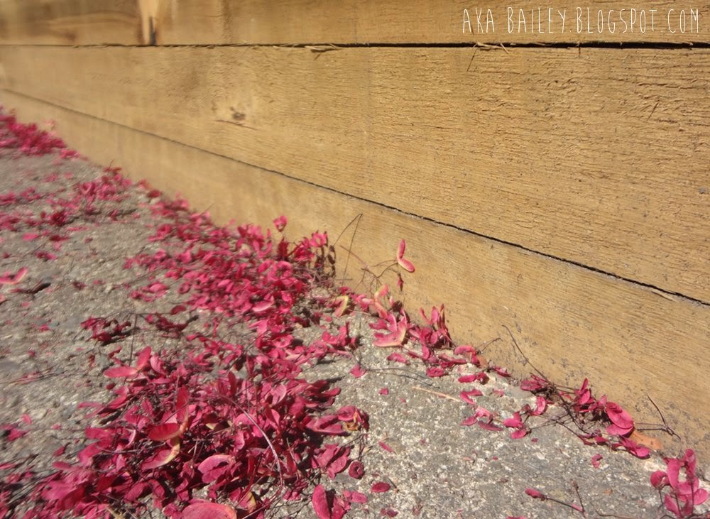 Pink petals alongside a brown wooden wall