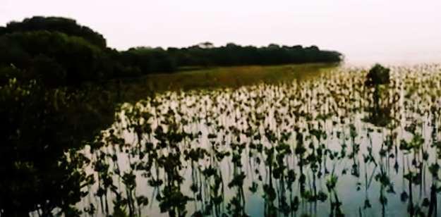 Gambar wisata hutan mangrove rembang