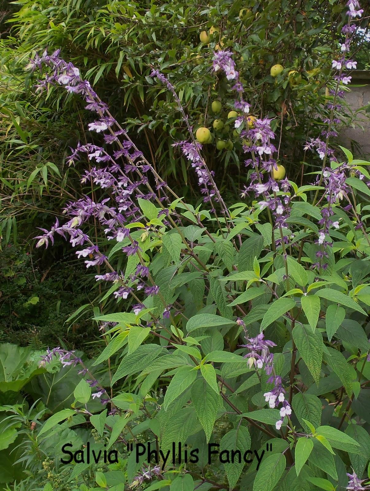 Jardin clair obscur fleurs en seine aux mureaux for Fleurs vivaces jardin