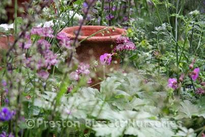 The Potter's Garden Artisan Chelsea Flower Show 2014