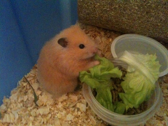 Funny animals of the week - 8 February 2013, funny animal photos, animals pictures, funny photos