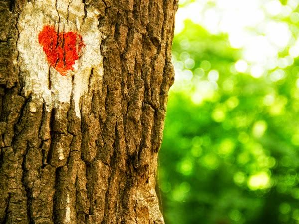 Amor que hace daño no es amor