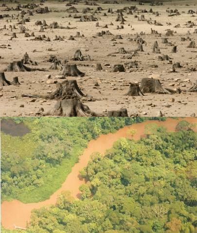 animals in danger of deforestation Because of massive deforestation, animals are left in the forests and and exposed to more types of danger because of the effects of deforestation.