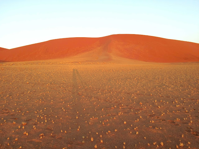 Long shadows against red dunes in Sossusvlei