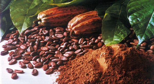 Khasiat Buah Koko Dalam Tamar Cocoa, Khasiat Buah Koko Dalam Koko Tamar