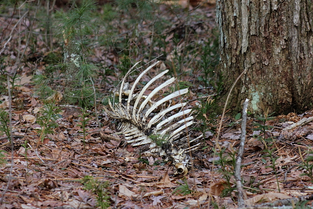 Passinthru outdoors shed hunting seasons begins