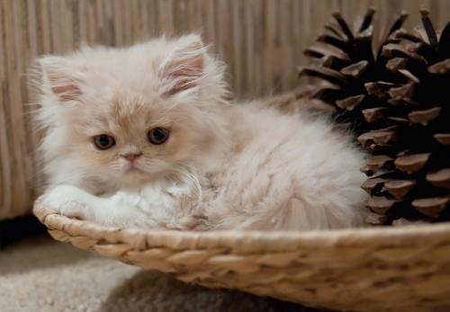 Кішки та коти. все про кішок та котів