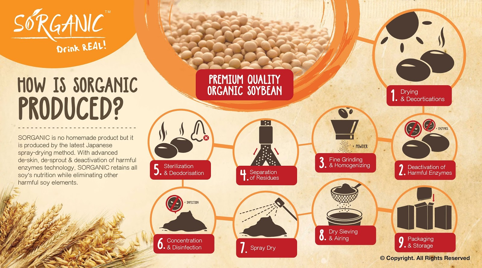 Sorganic Soy Powder Manufacturing Process
