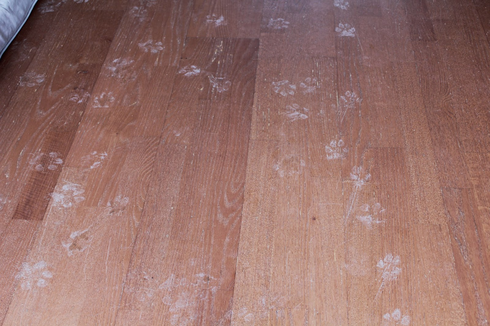 dog paw prints on floor