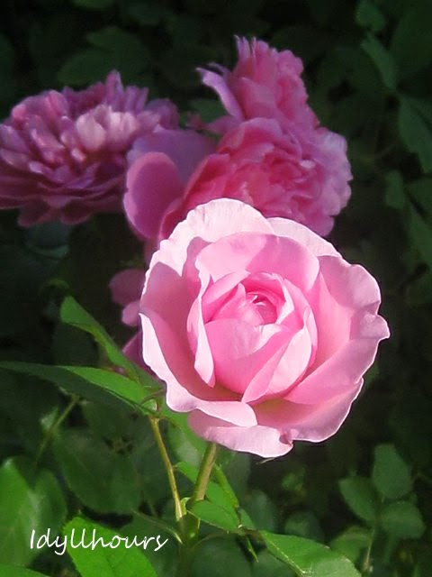 Gertrude Jekyll and Princess Anne...