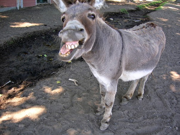 DO NOT BE A DONKEY!  A braying donkey laughs at those who seek to educate us on how to run our blog.