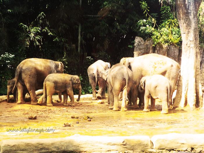 ke taman safari indonesia naik motor