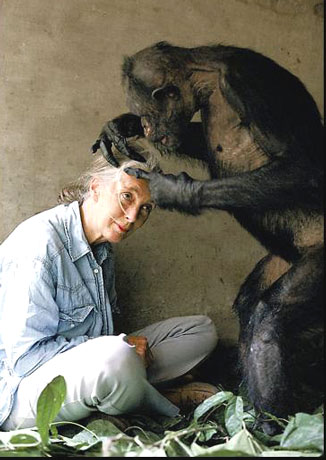 jane goodalls article was